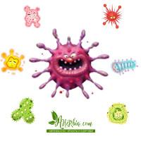 immunity iherb